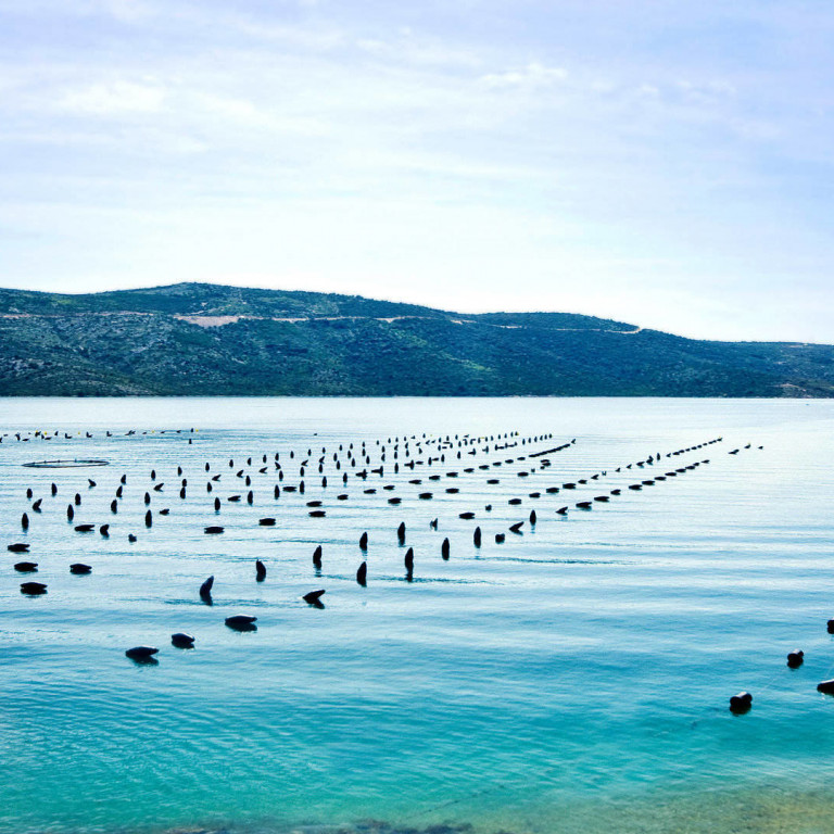 Pelješac Peninsula - Heaven for Seafood Lovers and Wine Connoisseurs